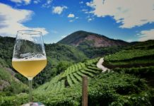 birra artigianale strada vino sapori trentino