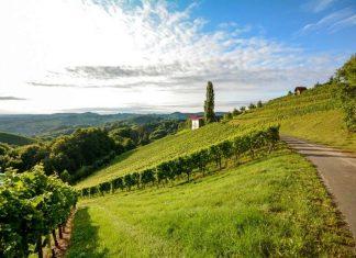 Vendemmia didattica - Langhe Roero Monferrato